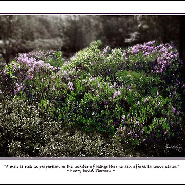 Sheep Laurel - Thoreau Quote, Cards and Prints by waynedking