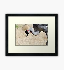 Search! Framed Print