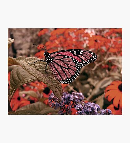 Jewel butterfly... Photographic Print