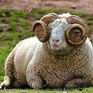 Curly horn! by vasu