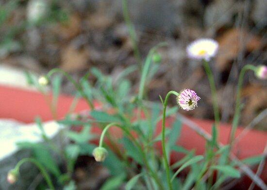 Spring Awakening by Barbara Shallue