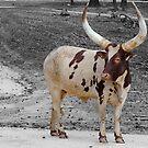 Long Horn by vasu