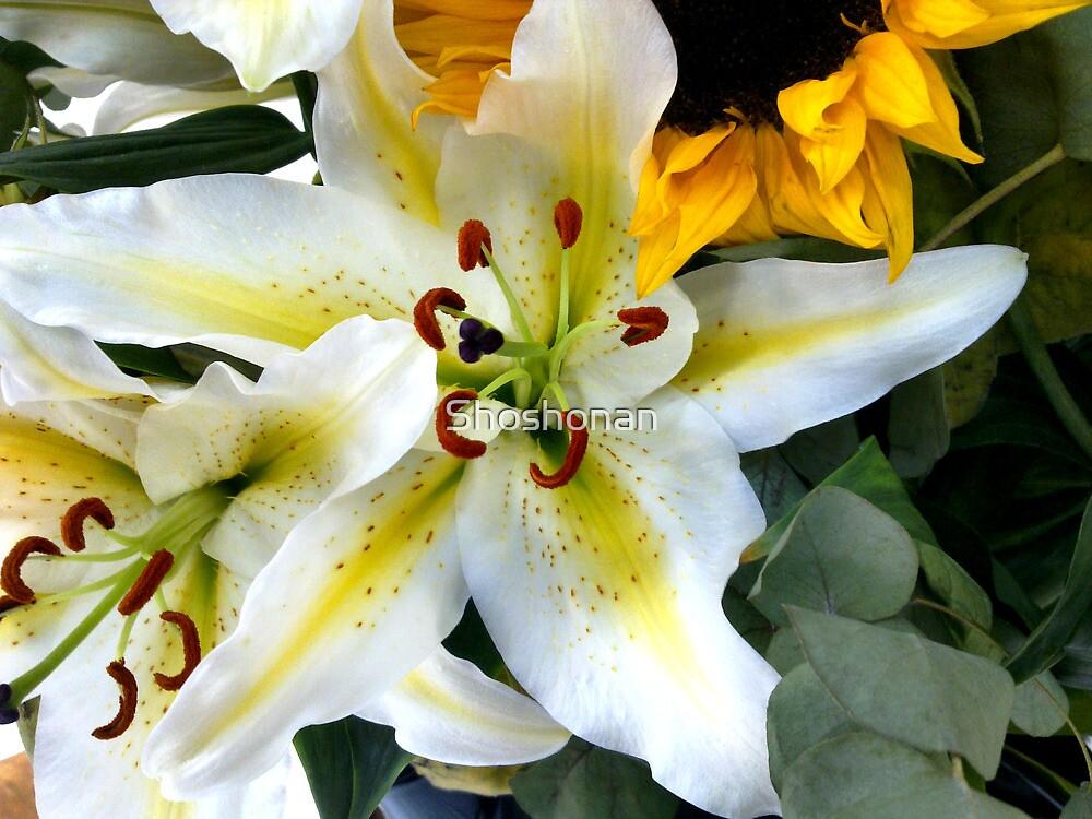 Mums Lilies by Shoshonan