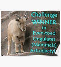 Winner's Banner Even-toed Ungulates Poster