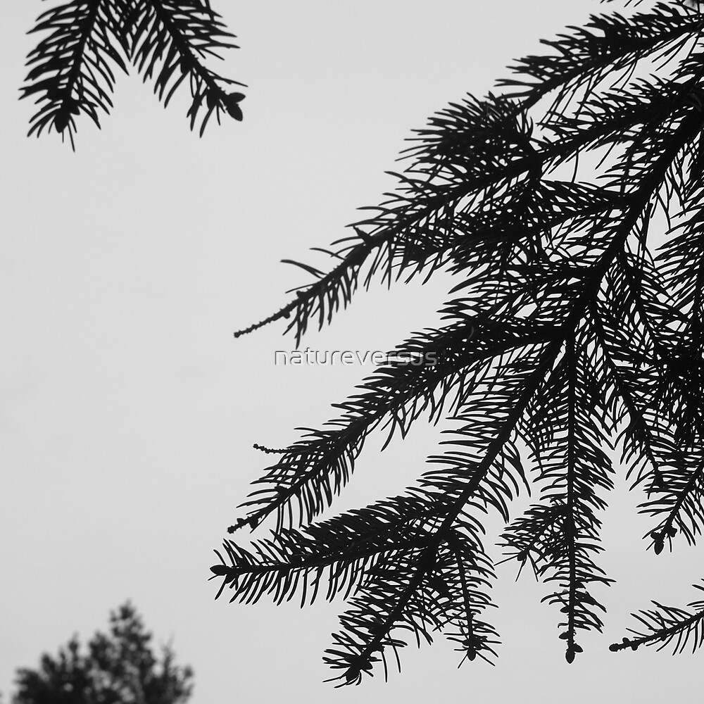 Three Trees by Deb Maidment
