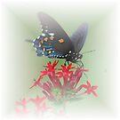 Beauty Flies by designingjudy