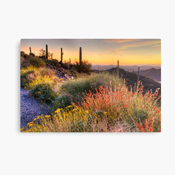 Desert Glow Metal Print