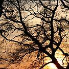 Pretty branches! by Tibbs