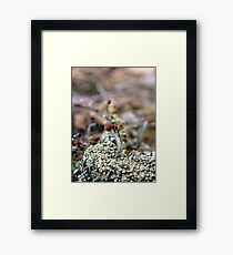 Fellowship Of the Small World Framed Print