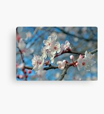 Botanical Blossoms Canvas Print