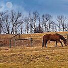 Under A Grazing Moon by Richard Earl