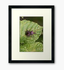 Cradled By Green Framed Print