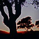 Olive tree sunset .Sardinia. Bella Italia. by Brown Sugar. by © Andrzej Goszcz,M.D. Ph.D