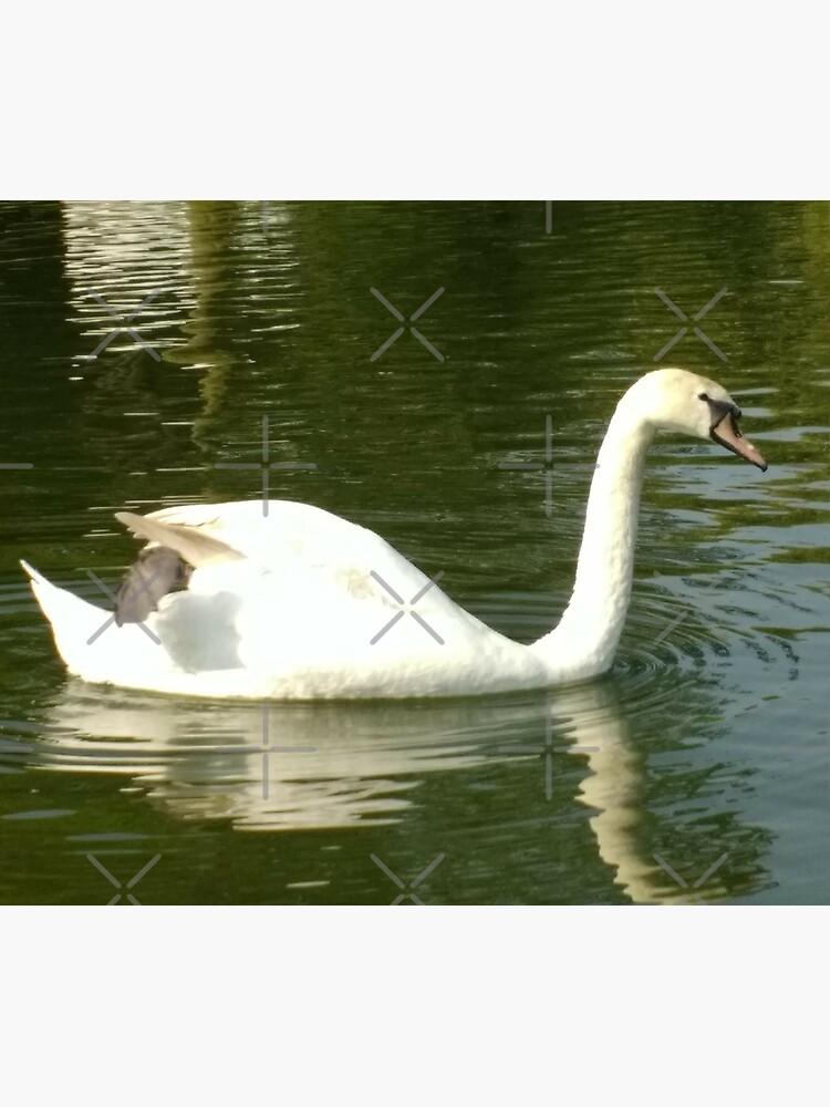 Merch #53 -- Swan - Shot 11 (Pearson Park) by Naean