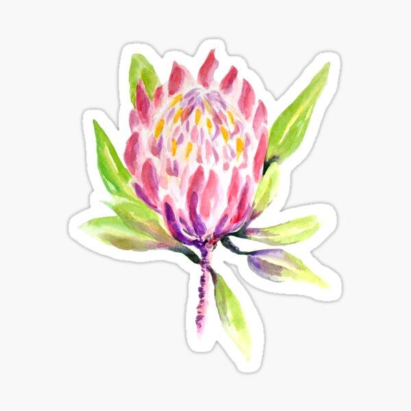 Pretty Protea Watercolour Painting Sticker