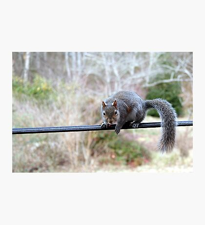 Baby Fuzzy - Is that a peanut you've got there?! Photographic Print