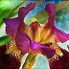 Watercolor Iris by Kathy Nairn