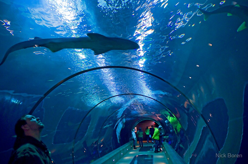 Creatures Of The Deep by Nick Boren