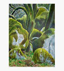 Moss on Rocks Photographic Print