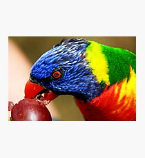 polly want a grape!!!!!!!! Photographic Print