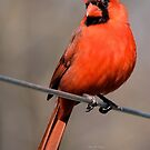 Red & Proud by Lori D Myers