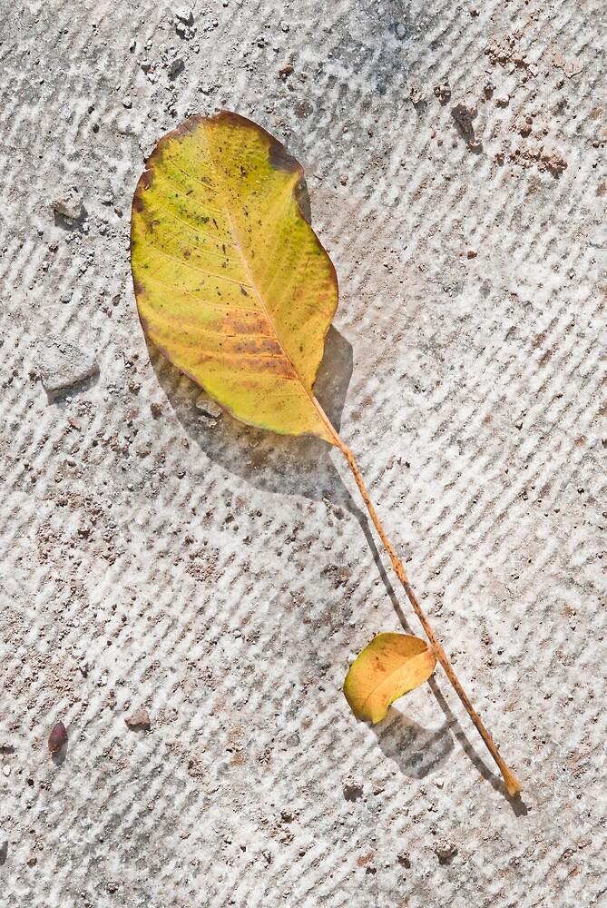 Leaf I by Clockworkmary