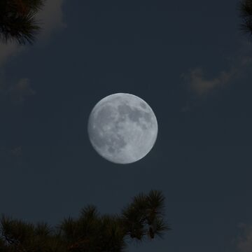 Piney Woods Moon by busyb