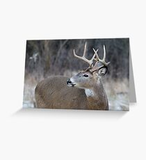 Eight Pointer Greeting Card