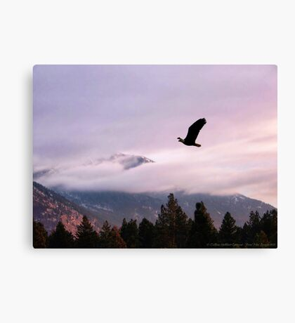 On Wings of Eagles Canvas Print