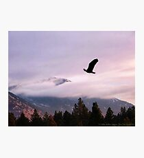 On Wings of Eagles Photographic Print