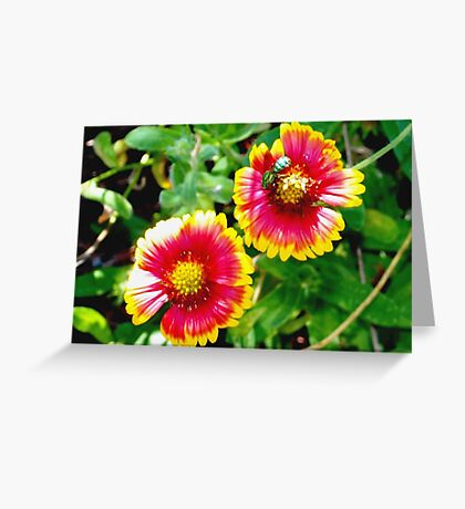 Green bee on sunny blanket flowers Greeting Card