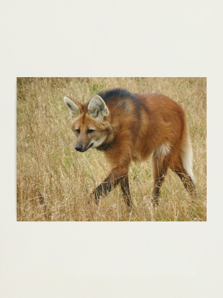 Alternate view of On the prowl Photographic Print