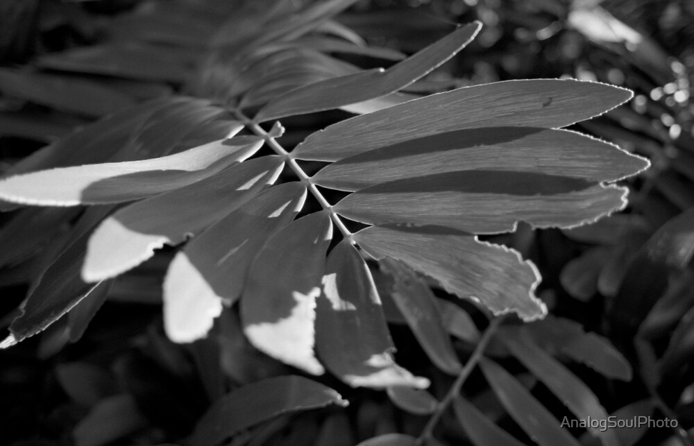 Leafy Textures by AnalogSoulPhoto