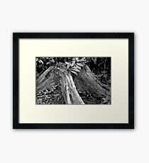 The Tree That Once Was Framed Print