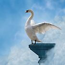 Swan Dive  by NewfieKeith