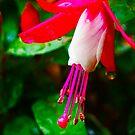 Rain in Pink by Matt Hill