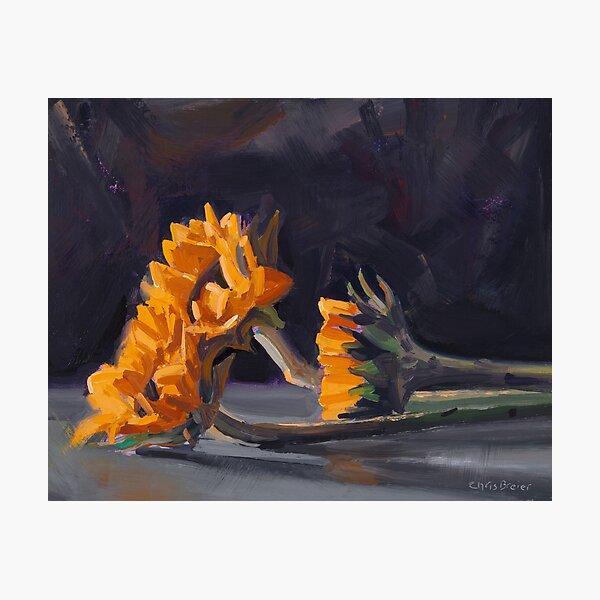 Three Mini Sunflowers Photographic Print