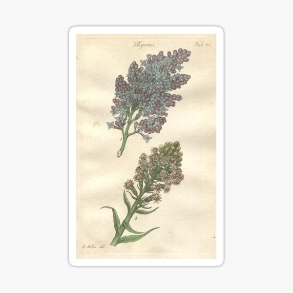 Lilac and Coltsfoot  Botanical Print by John Miller Sticker
