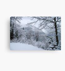 winter at walchensee Canvas Print