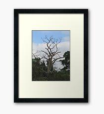 Pasture Landscape  Framed Print