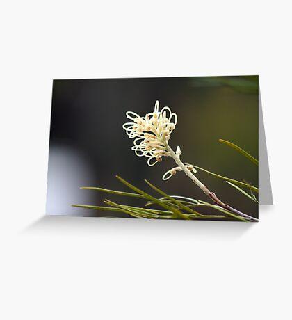 Grevilea Flowers Greeting Card