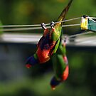 Hanging out to dry by Paul  Donaldson