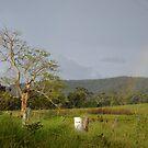 bush rainbow by Paul Buckley