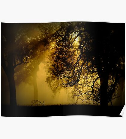 A curtain of gold Poster