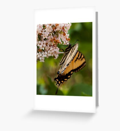 Our Butterfly Greeting Card