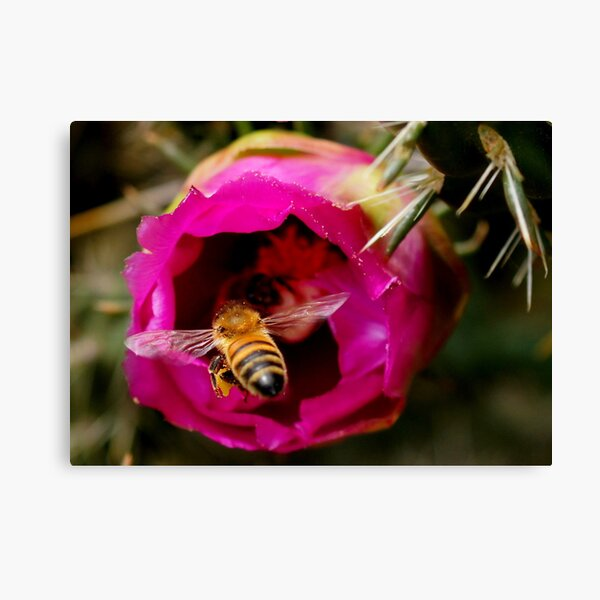 FLYING IN FOR MORE Canvas Print