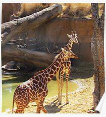 wild animals-friends Poster