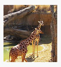 wild animals-friends Photographic Print
