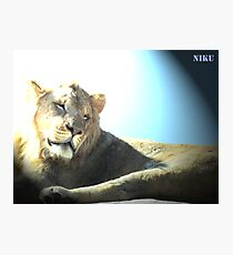 wild animals Photographic Print