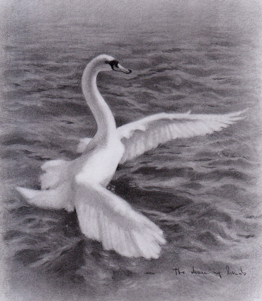 Swan by thedrawinghands